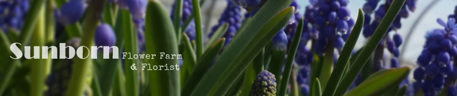 sunborn garden and flowers
